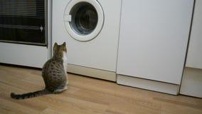 O gato pequeno olha uma máquina de lavar de trabalho