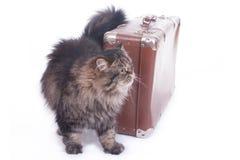 O gato persa é ao lado de uma mala de viagem velha Fotografia de Stock