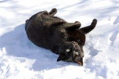 O gato preto Foto de Stock Royalty Free