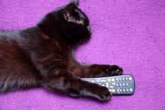 O gato preto ama comer com uma faca e bifurcar-se porque sente que se transformou um membro desta família para o bom Fotos de Stock