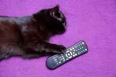 O gato preto ama comer com uma faca e bifurcar-se porque sente que se transformou um membro desta família para o bom Foto de Stock