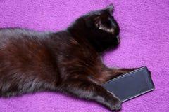 O gato preto ama comer com uma faca e bifurcar-se porque sente que se transformou um membro desta família para o bom Fotos de Stock Royalty Free