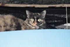 O gato preto bonito confundiu tão bonito ao sul de Tailândia Imagens de Stock Royalty Free