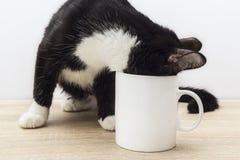 O gato preto-branco engraçado rastejou em uma caneca de café branco Fotografia de Stock