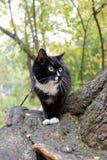 O gato preto e branco está sentando-se na árvore ao andar no parque urbano fotos de stock royalty free
