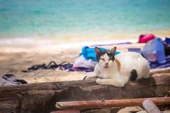 O gato preto e branco velho com listras encontra-se em uma ?rvore no Sandy Beach fotografia de stock