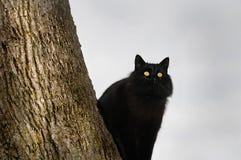 O gato preto empoleirou-se na árvore Fotografia de Stock