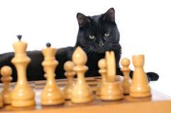O gato preto encontra-se perto do tabuleiro de xadrez isolado no fundo branco Fotografia de Stock Royalty Free