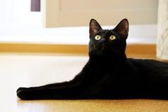 o gato preto novo bonito encontra-se no assoalho da cortiça no apartamento Fotos de Stock