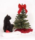 O gato preto olha a árvore de Natal Foto de Stock Royalty Free