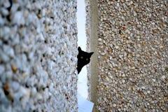O gato preto olha fora da janela imagens de stock royalty free