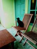 O gato preto que waitting a porta openned foto de stock