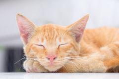 O gato que encontra-se no assoalho de madeira no fundo borrou perto acima dos gatos brincalhão Fotos de Stock Royalty Free