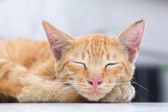 O gato que encontra-se no assoalho de madeira no fundo borrou perto acima dos gatos brincalhão Imagem de Stock