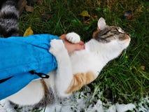 O gato que joga com braço e que olha afastado Imagens de Stock