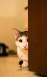 O gato que olha o Foto tonificada foto de stock royalty free