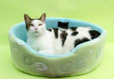O gato relaxa imagem de stock