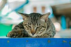 O gato relaxa na tabela de madeira Fotos de Stock