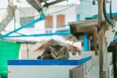 O gato relaxa na tabela de madeira Imagens de Stock