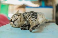 O gato relaxa na tabela de madeira Fotografia de Stock