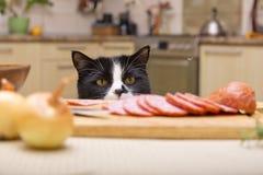 O gato rouba a salsicha Fotografia de Stock