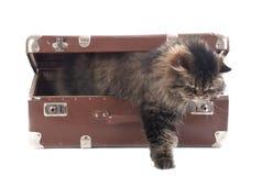 O gato sai de uma mala de viagem do vintage Imagem de Stock Royalty Free