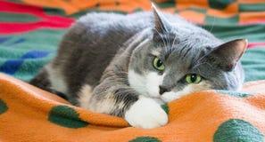 O gato satisfeito cai adormecido Fotografia de Stock