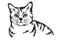 O gato senta-se Imagem de Stock Royalty Free