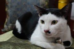 O gato senta-se agachado Fotos de Stock