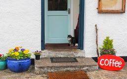 O gato senta-se em Front Porch da cafetaria com flores coloridas fotografia de stock