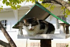 O gato senta-se em um alimentador do pássaro no parque na propriedade da contagem Leo Tolstoy em Yasnaya Polyana imagens de stock