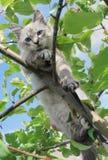 O gato senta-se em um ramo de árvore Fotografia de Stock Royalty Free