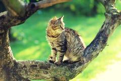 O gato senta-se em um ramo de uma árvore Foto de Stock
