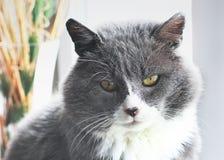 O gato senta-se em uma janela foto de stock
