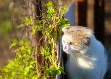 O gato senta-se em uma rua perto do arbusto verde imagens de stock royalty free