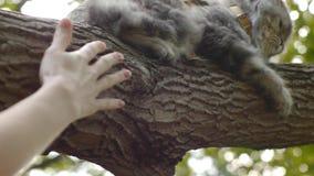 O gato senta-se na árvore e nas mãos vídeos de arquivo