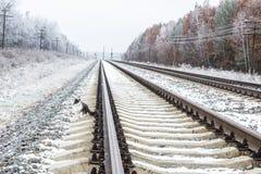 O gato senta-se na estrada de ferro inverno, um fundo bonito da floresta fotos de stock