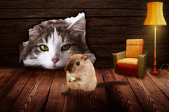 O gato senta-se na frente do furo do rato e observa-se o rato Imagem de Stock