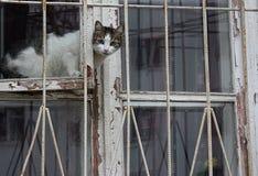 O gato senta-se na janela e olha-se fora Imagens de Stock