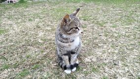 O gato senta-se no jardim foto de stock