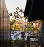 O gato senta-se no polo Foto de Stock