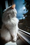 O gato senta-se pelo indicador fotografia de stock
