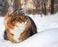 O gato senta-se sobre na neve Imagens de Stock Royalty Free