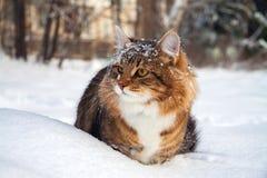 O gato senta-se sobre na neve Foto de Stock Royalty Free