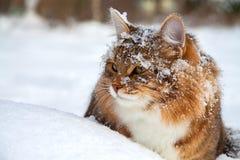 O gato senta-se sobre na neve Fotos de Stock Royalty Free