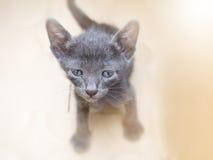 O gato sentado no assoalho Fotos de Stock