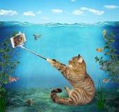 O gato toma um selfie sob a água imagens de stock royalty free