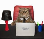 O gato trabalha na tabela 3 fotos de stock