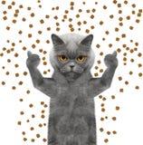 O gato trava o alimento seco que cai de cima de Fotos de Stock Royalty Free