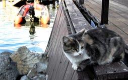 O gato tricolor desabrigado espera em pescadores do cais do mar com captura Imagem de Stock Royalty Free